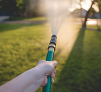 A hand holding a garden hose while watering a green lawn
