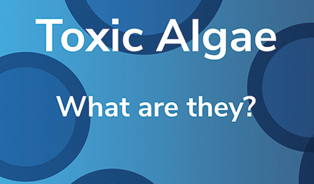 Toxic Algae What Are They